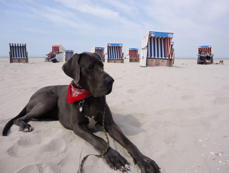 hunderegeln beach motel st peter ording. Black Bedroom Furniture Sets. Home Design Ideas